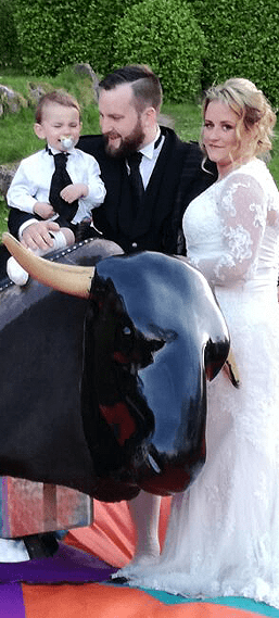 Rodeo bull wedding hire Carmarthenshire